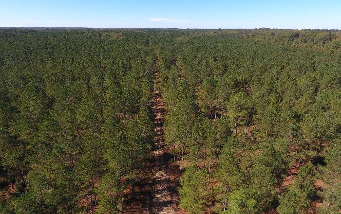 Advance Land and Timber the experts in Land for Sale in the